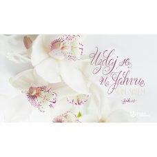 Pozadina - Uzdaj se u Jahvu svim srcem
