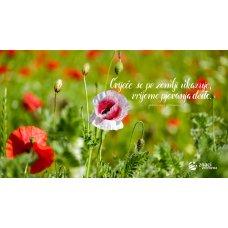 Pozadina - Cvijeće se po zemlji ukazuje, vrijeme pjevanja dođe